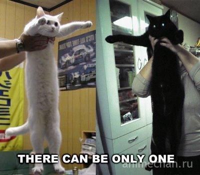 Longcat и Tacgnol