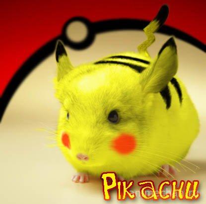 Pikachu live