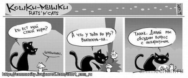Rats'n'Cats
