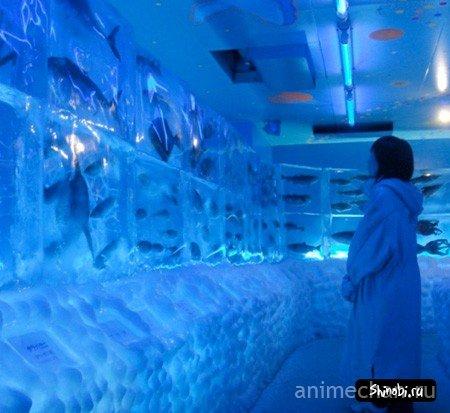 Ледяной аквариум в Кесеннума