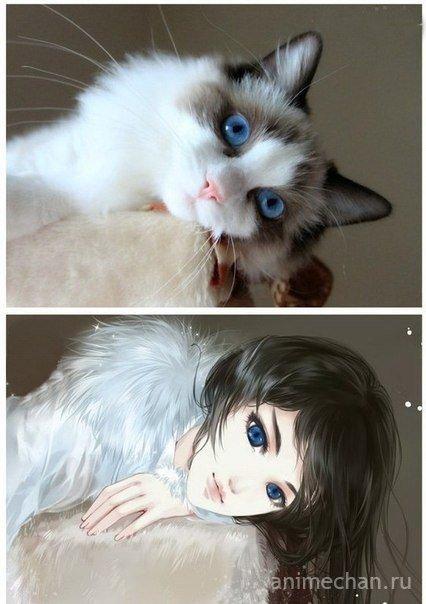 Кошки-няшки