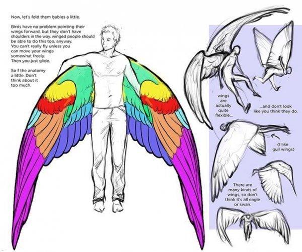 Гайд по рисованию крыльев.