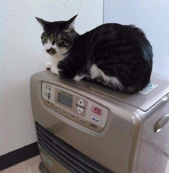 Работа с котиками