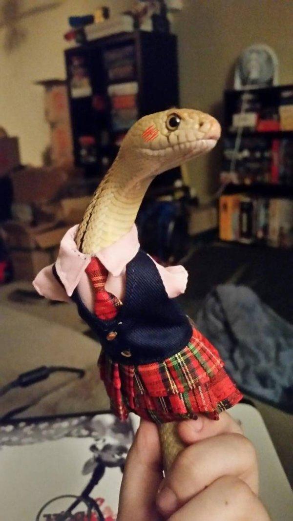 Змейка-цундере