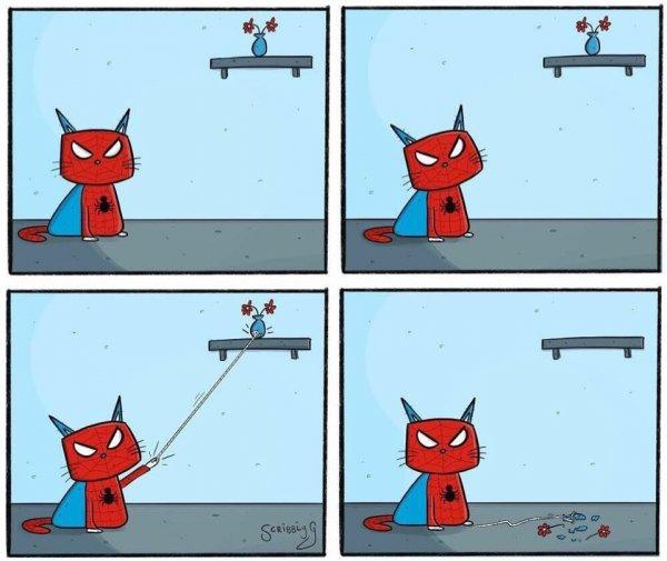 Кот-паук - на страже справедливости!
