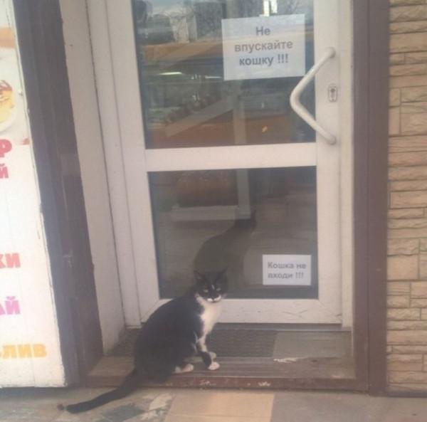 Не впускайте Кошку