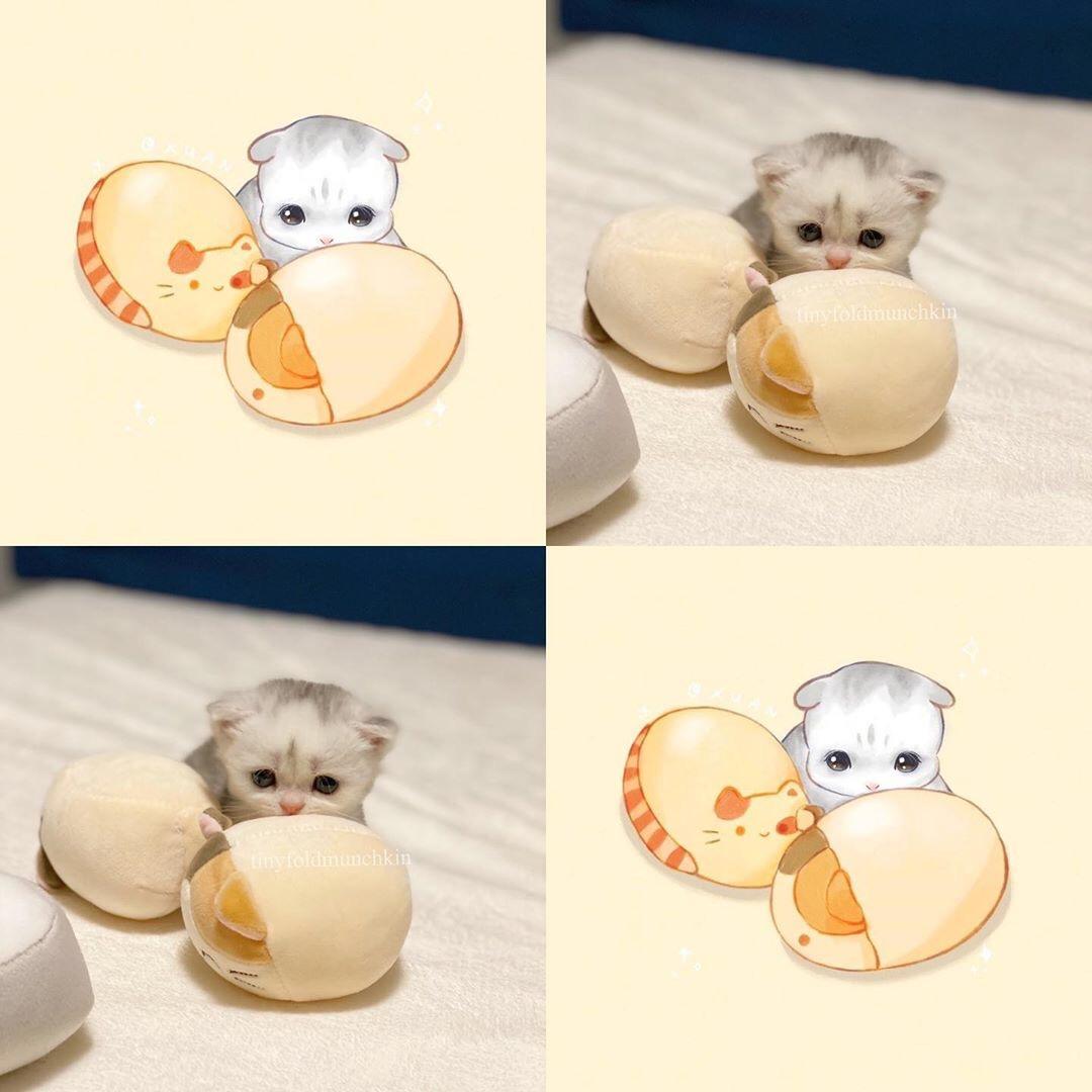 Котятка