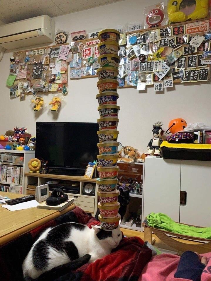 Кот, познавший дзен
