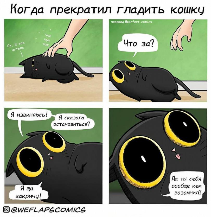 Практически каждый котик