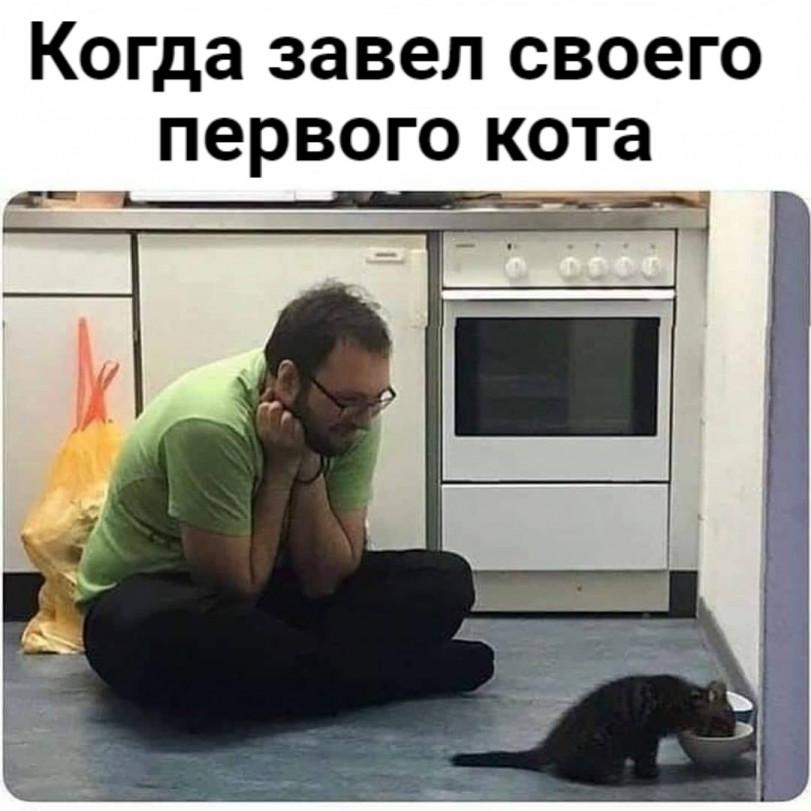 Веселые перерисовки из реальной жизни кошаков