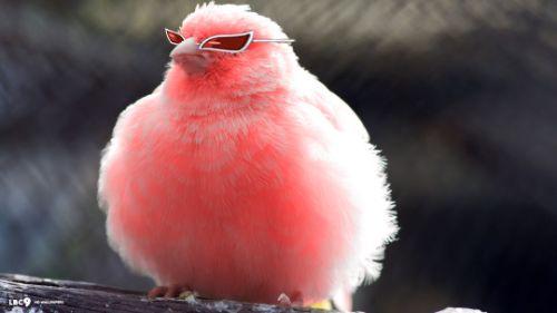 Косплей гордой птички