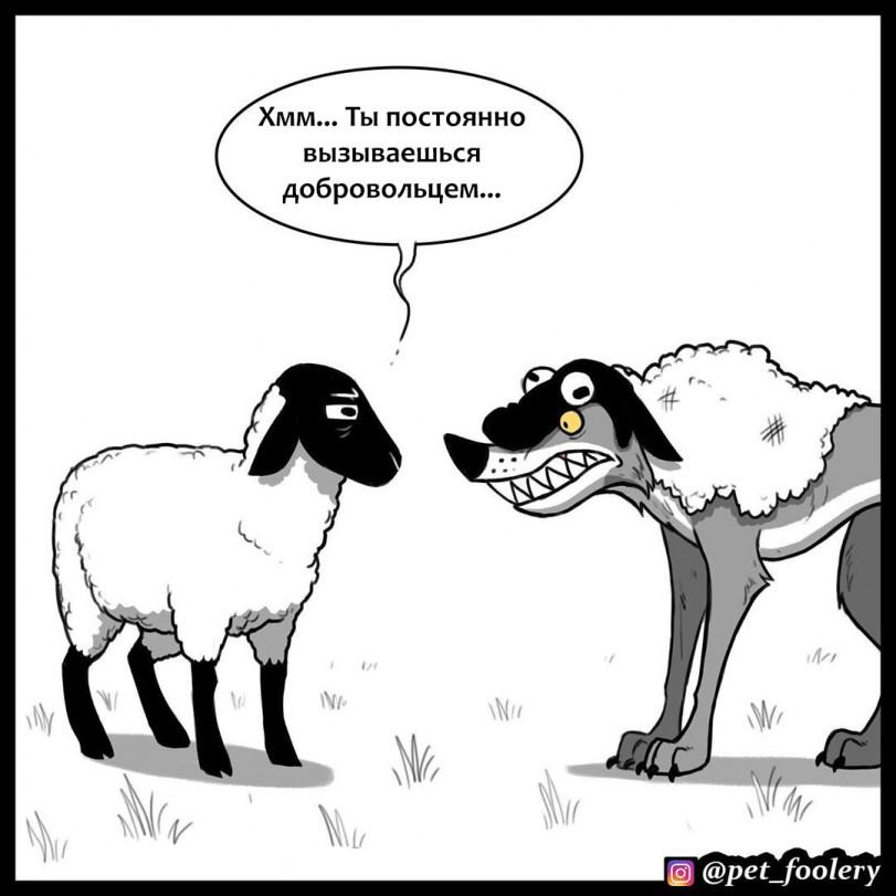 В овечьей шкуре