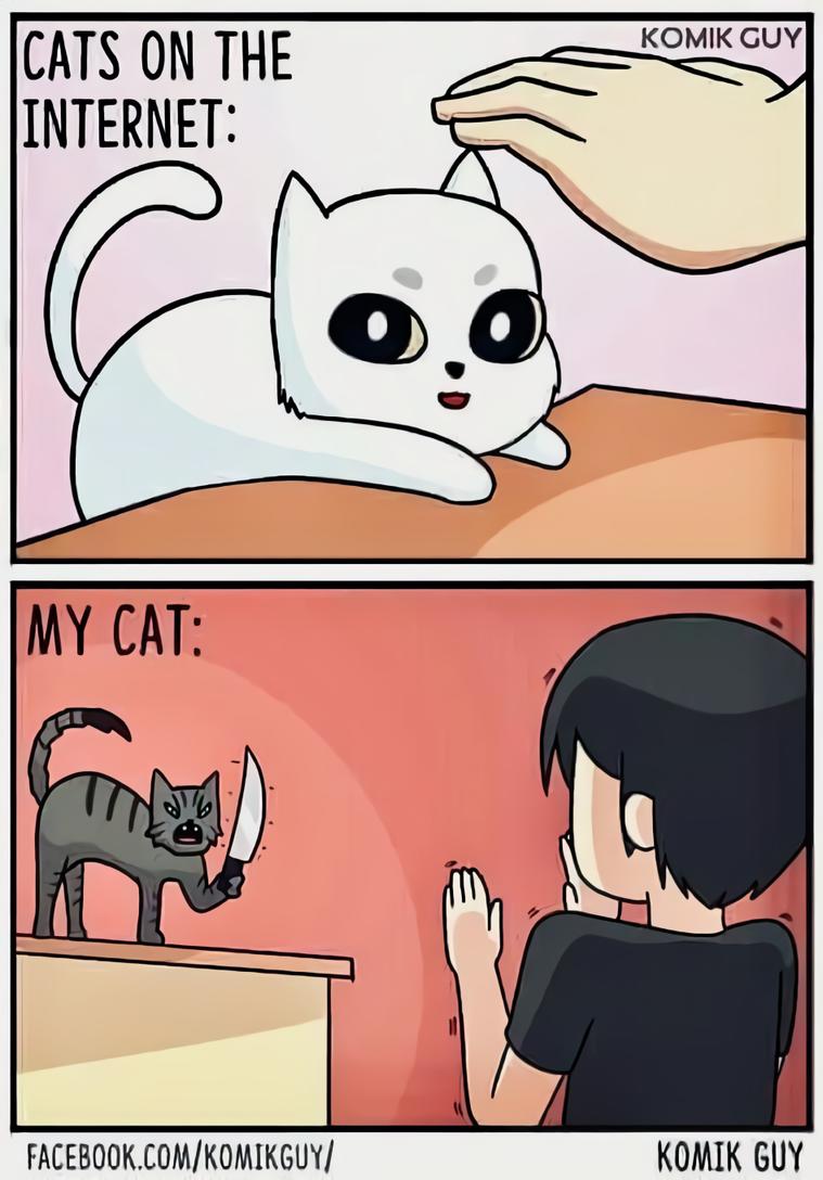 Коты в интернете и мой кот: