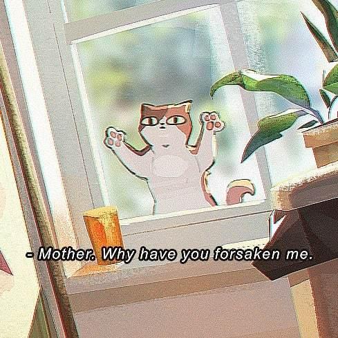 Впусти кота