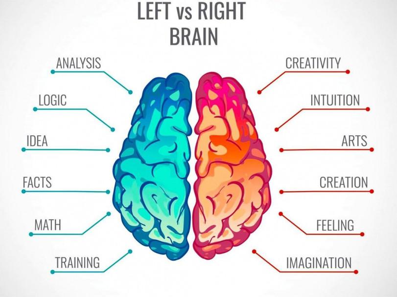 Левое полушарие, правое полушарие и мозолистое тело