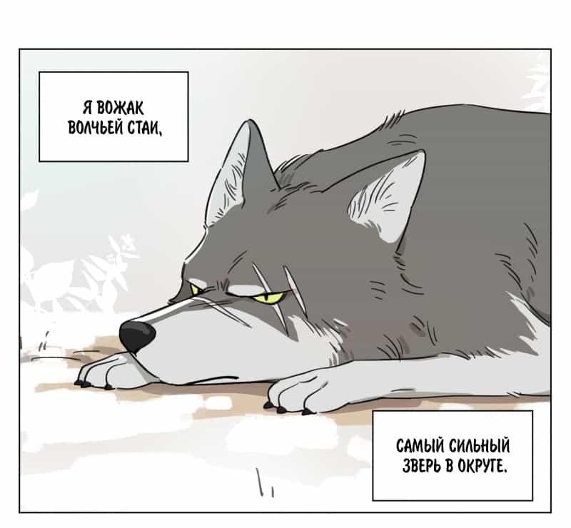 Волк и найденыш