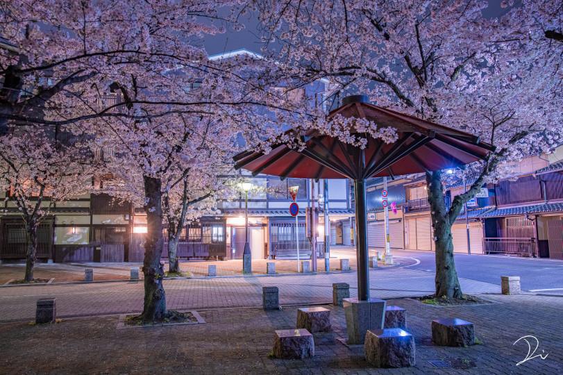 Сакура ночью. Гион, Киото