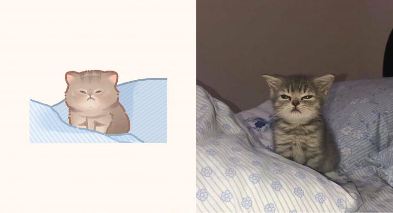 Коты понедельника