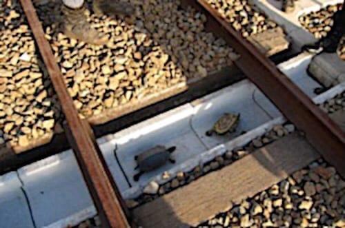 Безопасный железнодорожный путь для черепашек