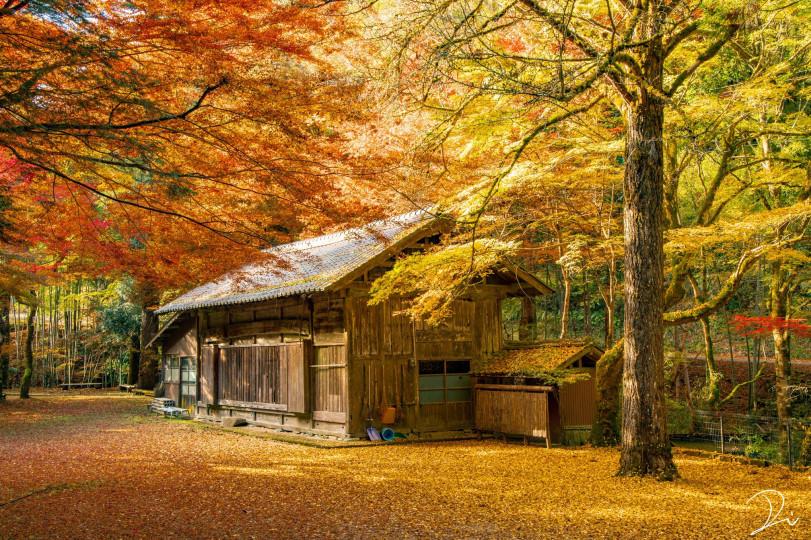 Четыре сезона Киото