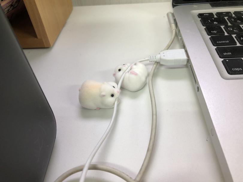 Ещё одно чудесное творение в японских гача-автоматах: хомячки, которые грызут провод