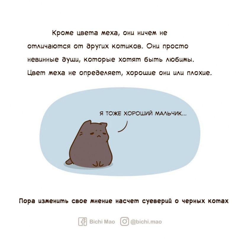 Черные коты lives matter!