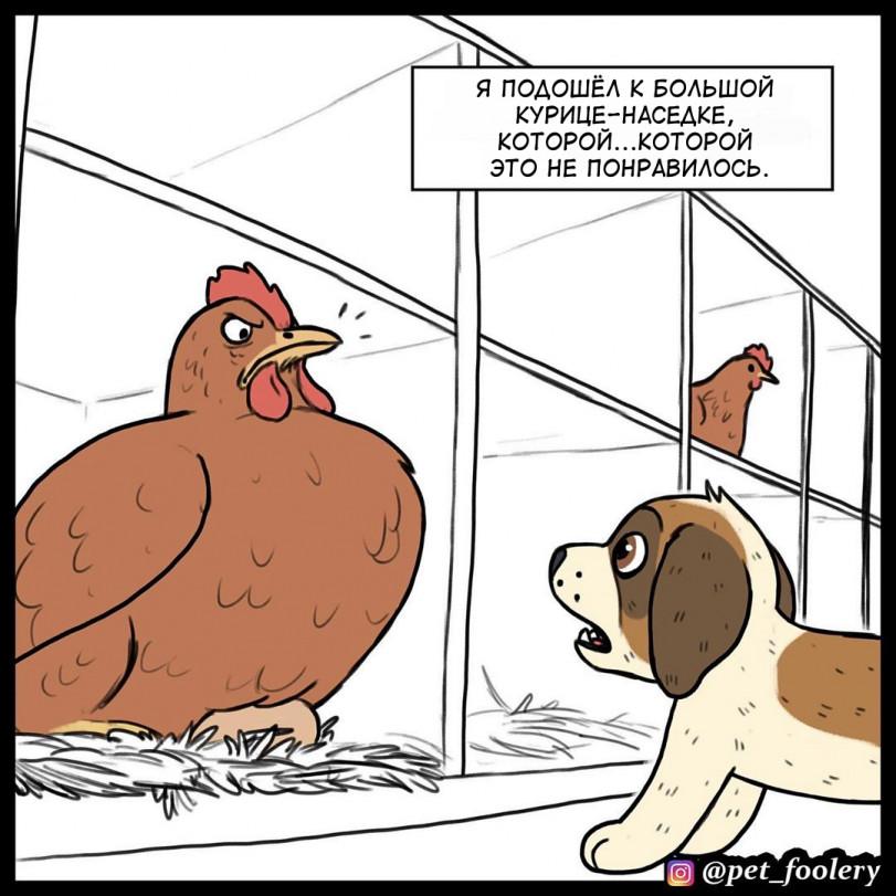 История про глаз и курицу