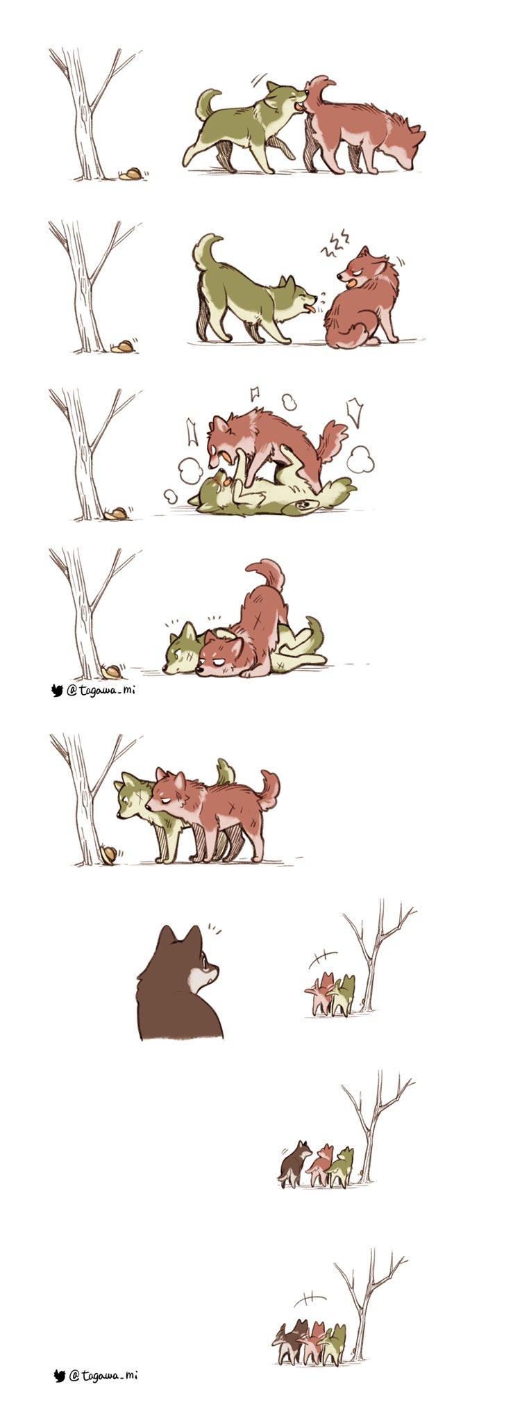 Приключения волчат