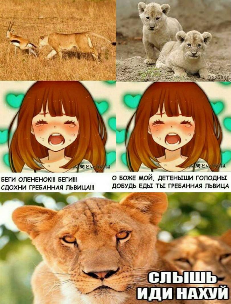 Вперед львица!