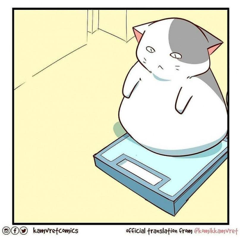 Буллинг котика