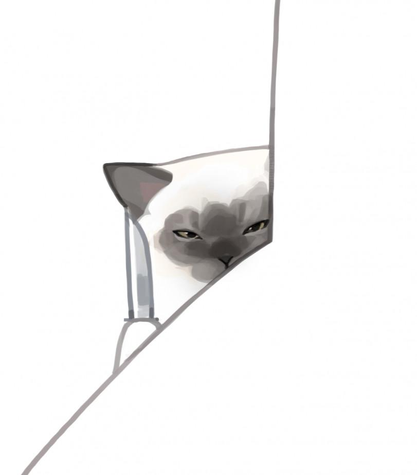 Коты от GENTLECAT