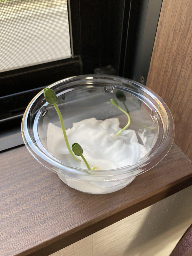 Миниатюрный арбуз