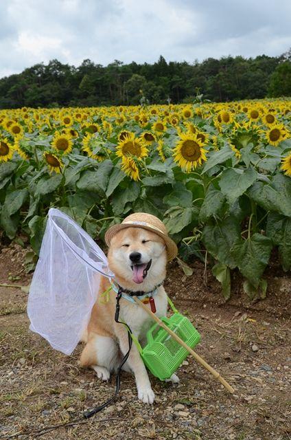 Собака гуляка