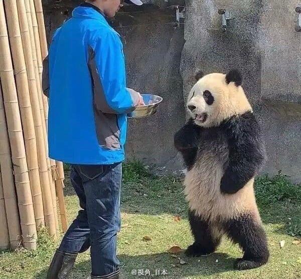 Панда косплеер