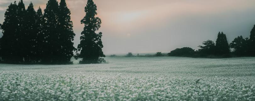 Туман в Ниигата