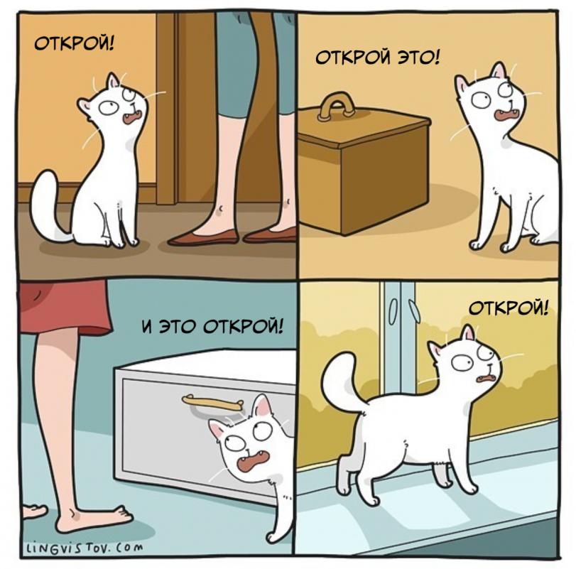 Из жизни котиков